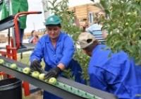 Pluk-O-Trak—noul prieten inovator al culegătorilor de mere din Moldova