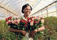 Сколько в День влюблённых заработают продавцы цветов на ул. Бэнулеску-Бодони