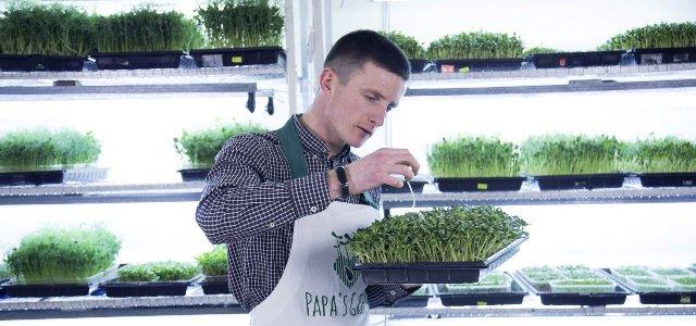 Микрозелень, выращенная в Молдове - новое поколение суперпродуктов