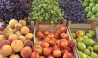 Евроазиатский союз готов покупать миллионы тонн молдавской сельхозпродукции