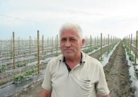 Молдавский фермер выращивает огурцы на шпалерной сетке (фото)