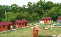 Terapie cu zumzet de albine. Afacerea de succes a unui cuplu din raionul Donduşeni, care şi-a deschis o agropensiune