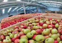 Уже никто не хочет покупать яблоки, хранившиеся в подвалах. А холодильников не хватает