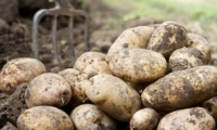 Как Белоруссию сделали виноватой за подорожание картошки в Молдове