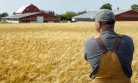În anul curent, producătorului de cereale i se va umple sacul