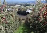 Pomicultura îşi are locul bine identificat în garnitura economică a ţării