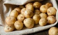 Спрос на картофель упал: местные производители не могут продать свой товар и терпят убытки