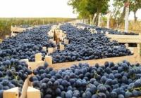 Виноградная столица Восточной Европы, село мультимиллионеров - Костешты, Молдова (часть 1)
