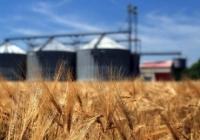 В госрезерве нельзя хранить пшеницу вечно