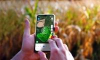 Российская компания внедряет спутниковый мониторинг посевов в Молдове