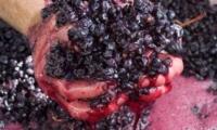 Молдавские исследователи придумали, как использовать фруктовые и виноградные выжимки