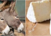 În Moldova se produce un cașcaval unic în lume, din lapte de măgăriță