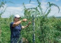 Prima pepinieră de pomușoare goji din Moldova