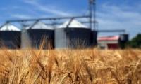 Agricultura scoate economia Moldovei din recesiune