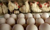 Молдавские яйца и мясо птицы не попадут на рынок ЕС в этом году