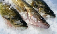 Молдова и Германия являются крупнейшими покупателями украинской рыбы