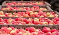 Процедуры экспорта молдавских товаров в страны Средиземноморья упростят
