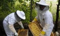 Кабинет министров одобрил два документа по развитию пчеловодства
