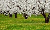 Tendinţe mai noi şi mai vechi pe piaţa de desfacere a merelor noastre