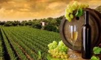 Modificări legislative prin care banii viticultorilor rămân la viticultori
