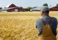 В этом году производители зерновых ожидают увеличения урожая